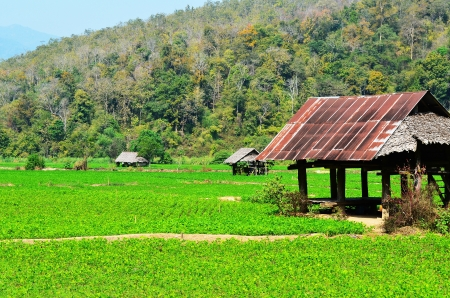 shanty: Cottage or Shanty at a Countryside Garden of Thailand