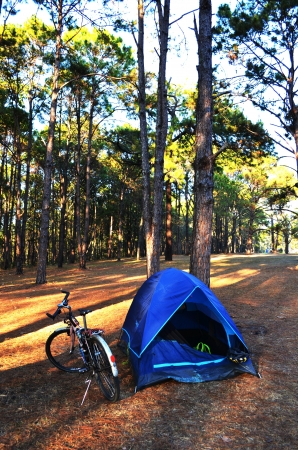 A Camping in Pine Forest with Bicycle