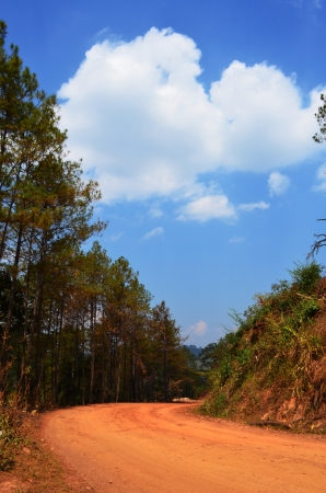 A Non-Asphalt Paved Road with Pine Forest and Cloudy Blue Sky