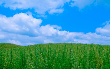 The Weedy Grass Field under Cloudy Blue Sky