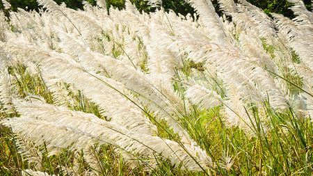 The Flowers of Grass is moving in the wind  Stock Photo