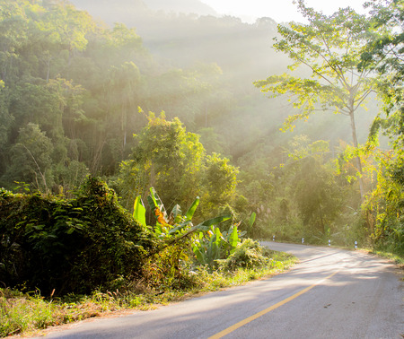 The Forest and Road with Sunbeam in the morning. Stock Photo