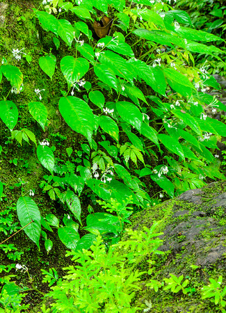 The Green Moss and Fern in Deep Forest at Sarika Waterfall Thailand. Stock Photo