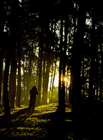 The Silhouette of Forest Tree in Morning Dawn.