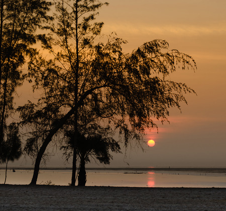 The Silhouette Pine Tree and Sunrise on Morning Sea. Stock Photo