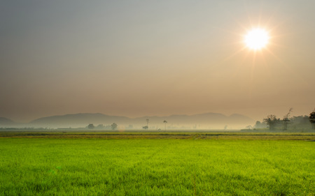 The Landscape of Rice Field and Sunrise Dawn.