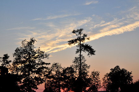 The Silhouette of Tree while Sun Down. Stock Photo