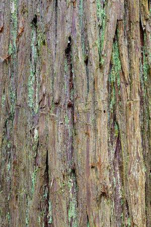 bark texture: Tree bark texture background