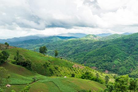 mea: Corn Plantation at Mea Salong Mountain, Chiang Rai province, Thailand Stock Photo