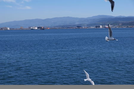 seaway: birds flying in the middle of the sea