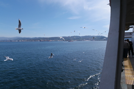 seaway: seagulls accompanying steamboat cruise on a sunny