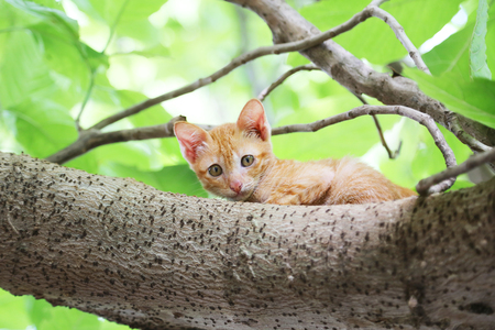 A cute brown kitty climbs on the tree.