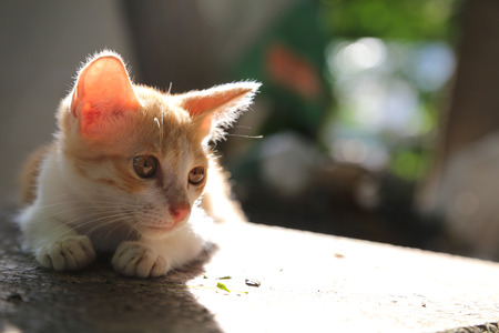 A cute brown kitty looks for something. Stok Fotoğraf