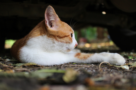 A cute brown cat lying  outdoor in fall.