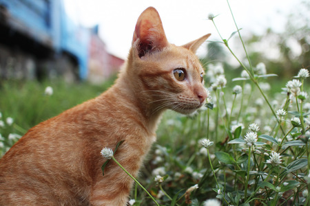 Brown kitty sits in the wild flower field.