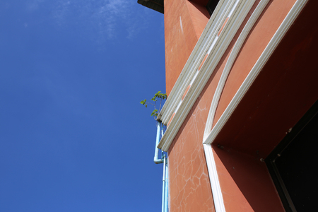 Bodhi tree (ficus religiosa) grows on the edge of the red building. Stok Fotoğraf