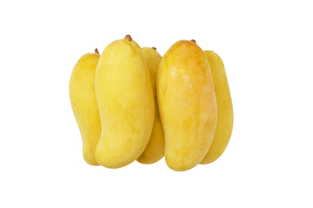 Mahachanok mango the famous go from Thailand, isolated on white background.