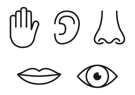 Set di icone di contorno di cinque sensi umani: vista (occhio), olfatto (naso), udito (orecchio), tatto (mano), gusto (bocca con lingua).