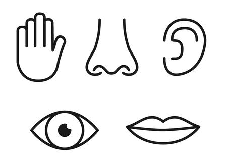 Conjunto de iconos de contorno de cinco sentidos humanos: visión (ojo), olfato (nariz), oído (oído), tacto (mano), gusto (boca con lengua). Ilustración de vector