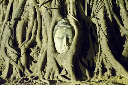 Head of buddha in the tree root at Ayutthaya,thailand Stock Photo - 17073802