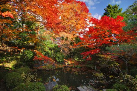 kyoto: Autumn Japanese garden with maple in Kyoto,Japan
