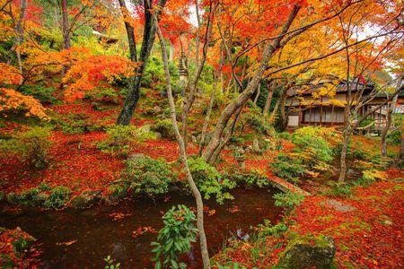 京都の紅葉と秋の日本庭園