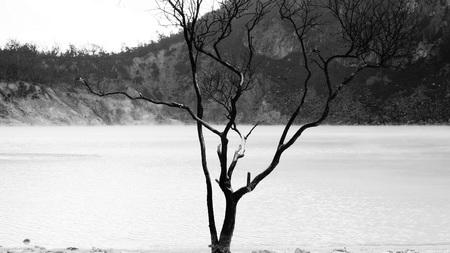 致命的な木と湖