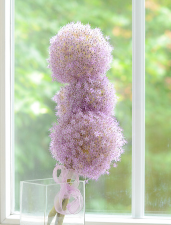 villi: Three allium lilac flowers spherical like a ball against the window