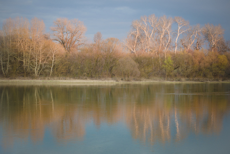 Reflection of the trees in the river