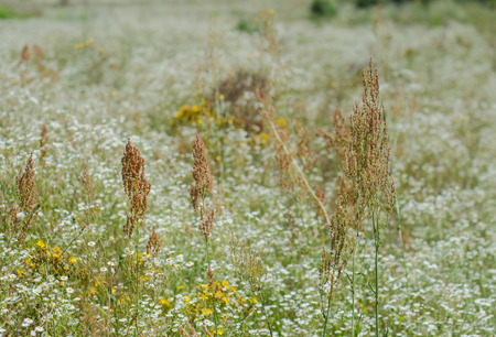 Girl running in meadow grass and flowers summer