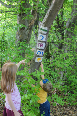 Trial signs on the tree and children in the Normafa forest