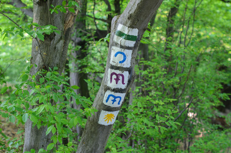 Trial signs on the tree in the Normafa forest