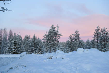Spruces and other trees along the road in pink sunrise in winter Stock Photo