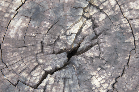 Close up surface wood of cut tree texture and background.