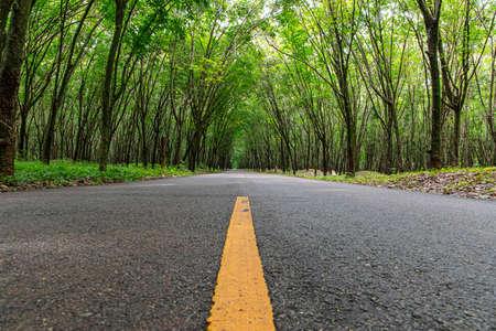 Road running through rubber tree on rain season. Lanscape image.