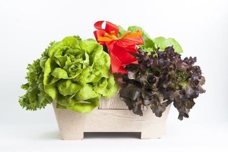vibrat color: hydroponics vegetable for fresh salad Stock Photo
