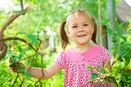 Cute little girl is picking sweetberies from the bushes photo