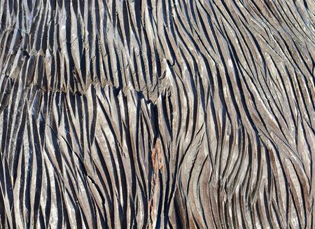 gemusterte Textur von einem dunklen Baumrinde