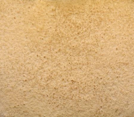 細孔きのこ抽象化、背景フォレスト マッシュ ルーム ハット 写真素材