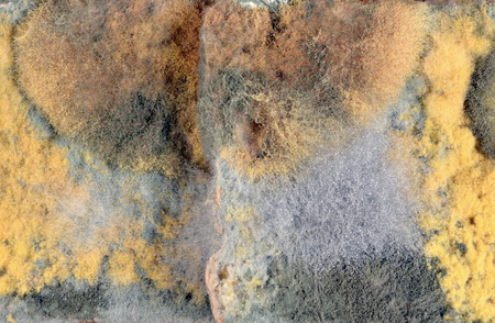 Background of mold of different colors. Dangerous mold on bakery products