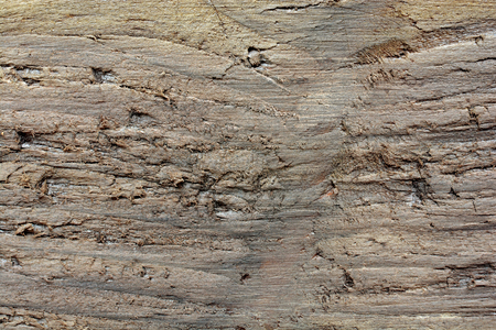 Wooden background. Texture of a board.  Background of a brown old tree with a ragged surface. Photo macro