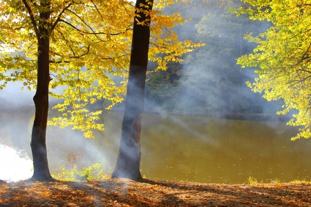 Fog autumn forest near the lake photo