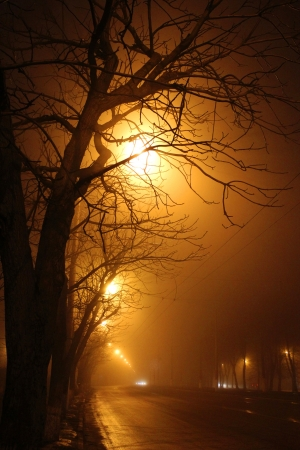 trees near the road and fog in the night Stock Photo - 14098891