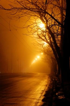 Moonlight lanterns: cây gần đường trong sương mù vào ban đêm Kho ảnh