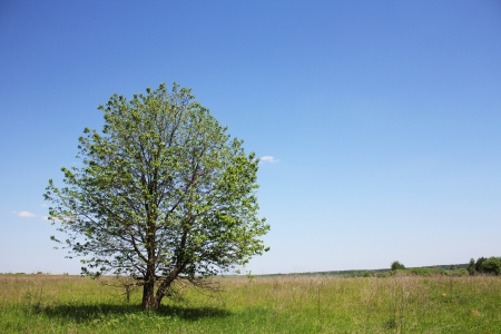 tree of the field on the nature photo