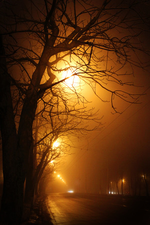 a trees beside the road at night photo