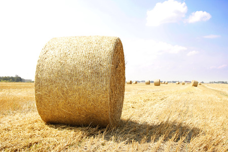 a Hay bales on a field photo