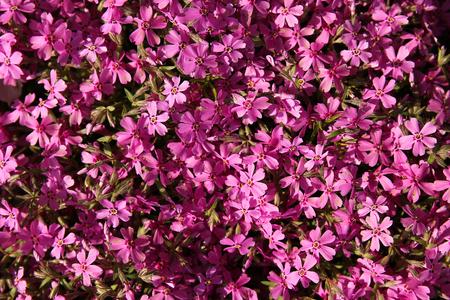 very: a very beautiful purple flowers Stock Photo
