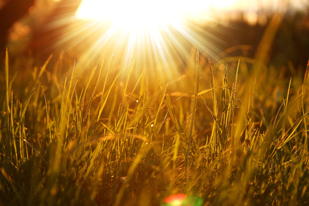 a  grass background with sun