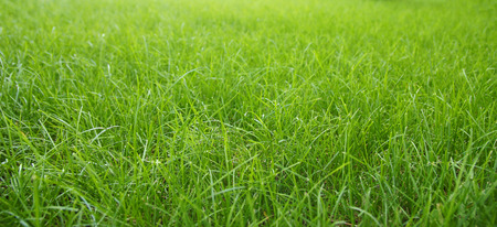 a nice green grass background
